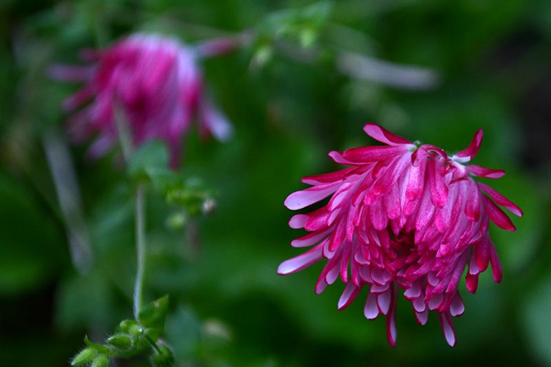 цветы дождь 15.jpg