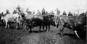 1922. Тургояк. Детская трудовая колония в поселке Тургояк. В коровьем загоне