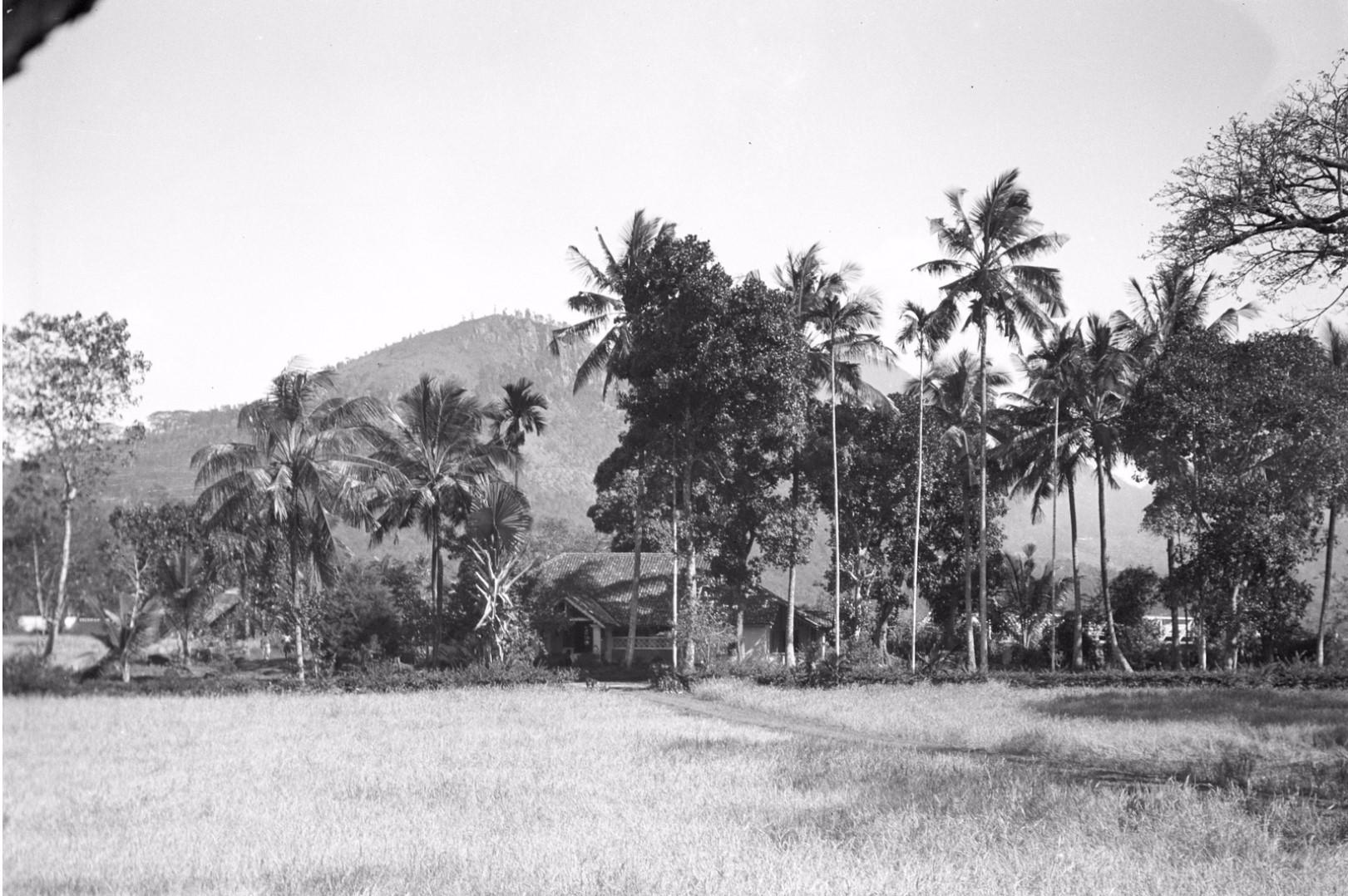 206. Ферма у рисового поля в окрестностях Бадуллу