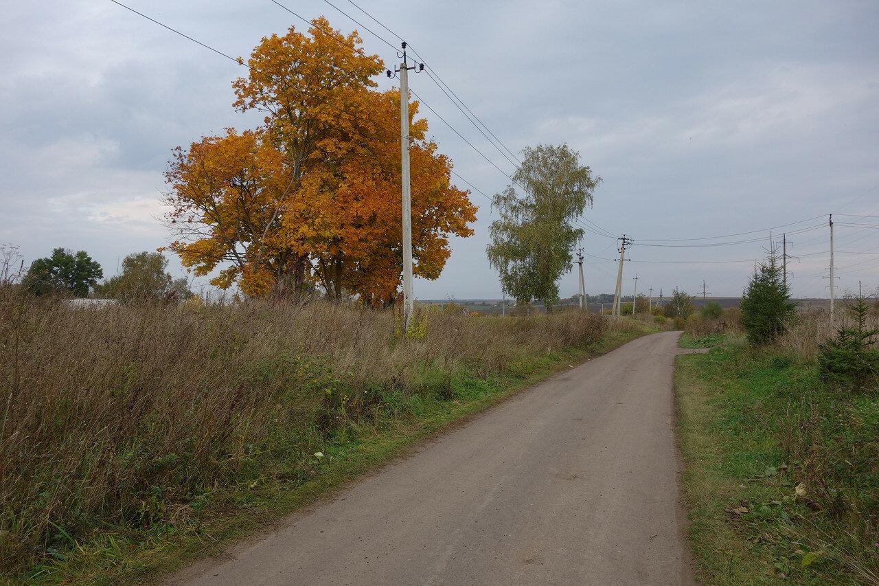 клён и берёза, село Знаменское