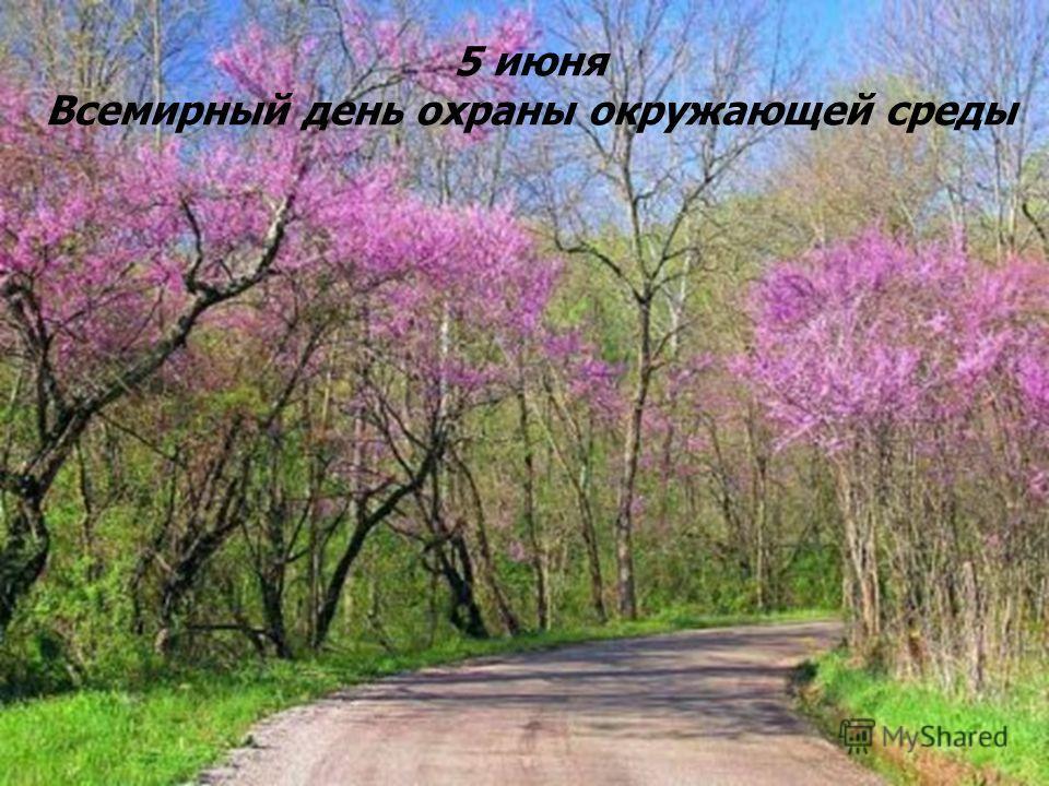 5 июня День охраны окружающей среды. Весеннее цветение