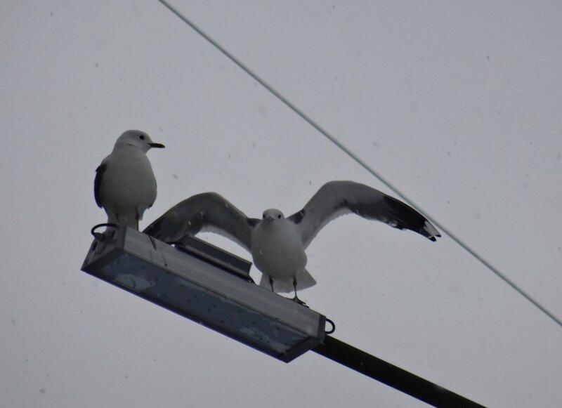 Angry birds DSC02673 (1).JPG