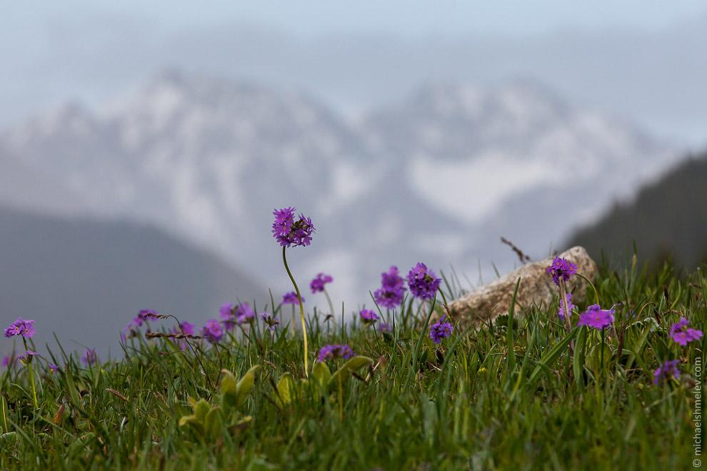 Сын пастуха в ущелье Чон Кызыл Суу, Киргизия. По местным меркам этот двенадцатилетний мальчишка уже