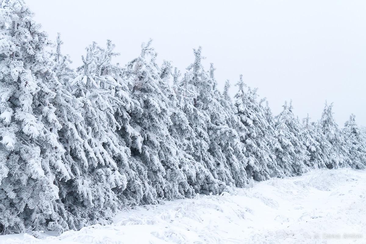 зима иней кумысная поляна саратов фото 5