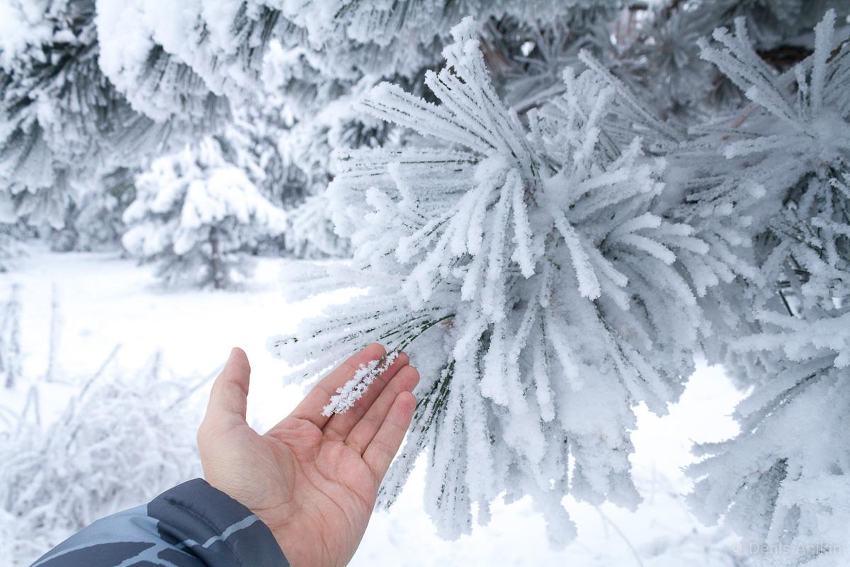 зима иней кумысная поляна саратов фото 7