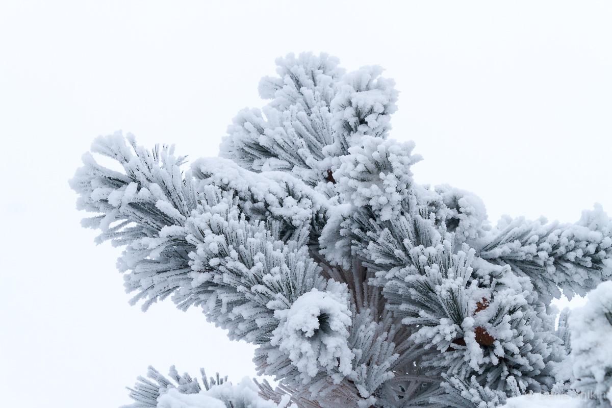 зима иней кумысная поляна саратов фото 8