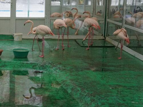 Розовые фламинго в закрытом павильоне