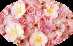 libellulegraphisme_fleurs_rose.png