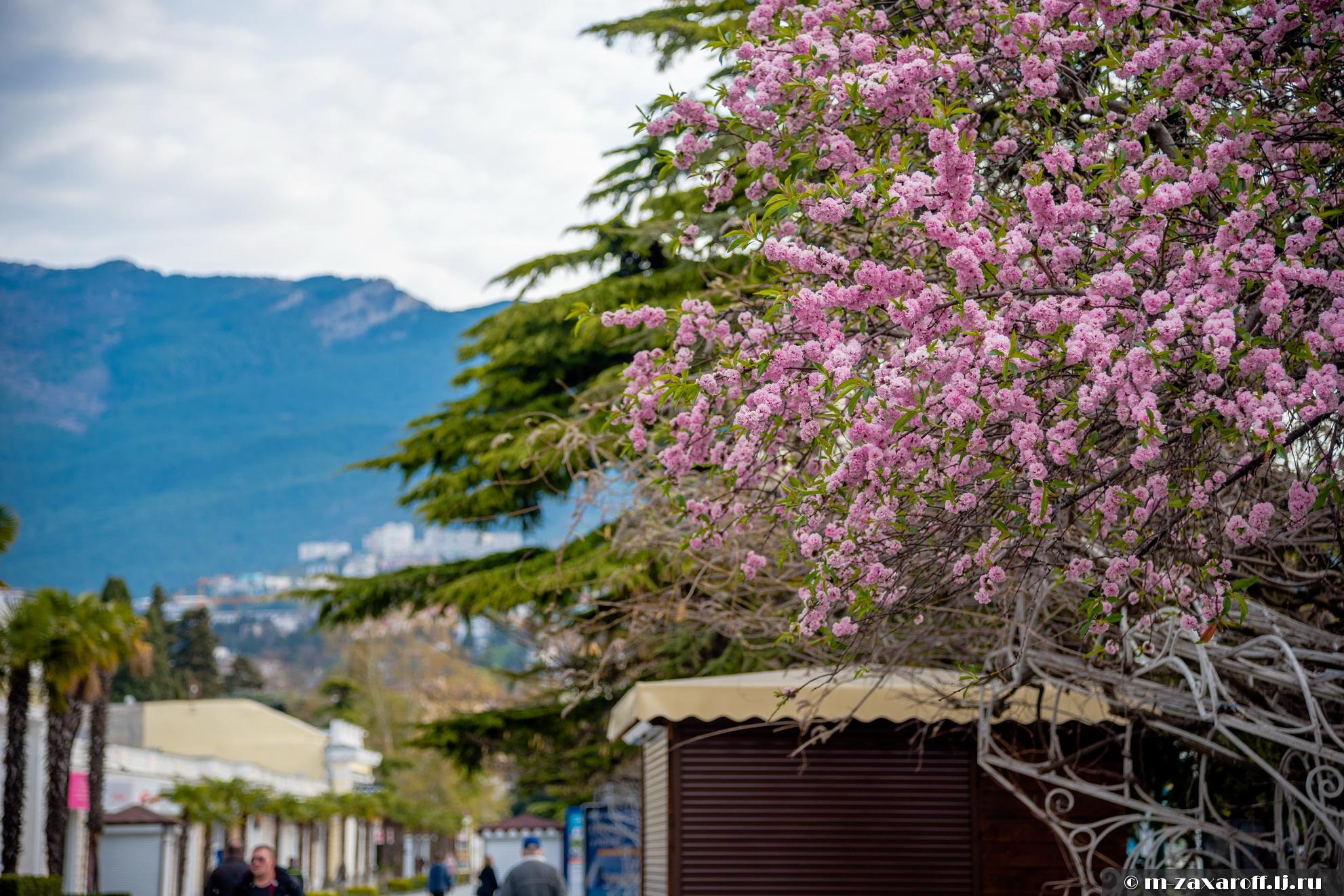 маршрут весна на набережной ялты фото этого