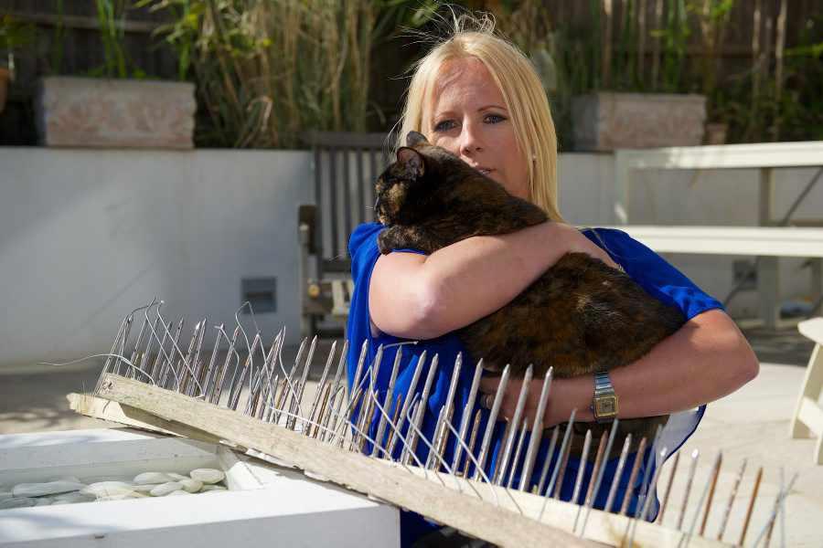 Кошки смогли ответить на человеческую жестокость только так....