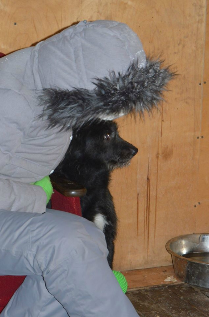 Патрик собака из догпорта
