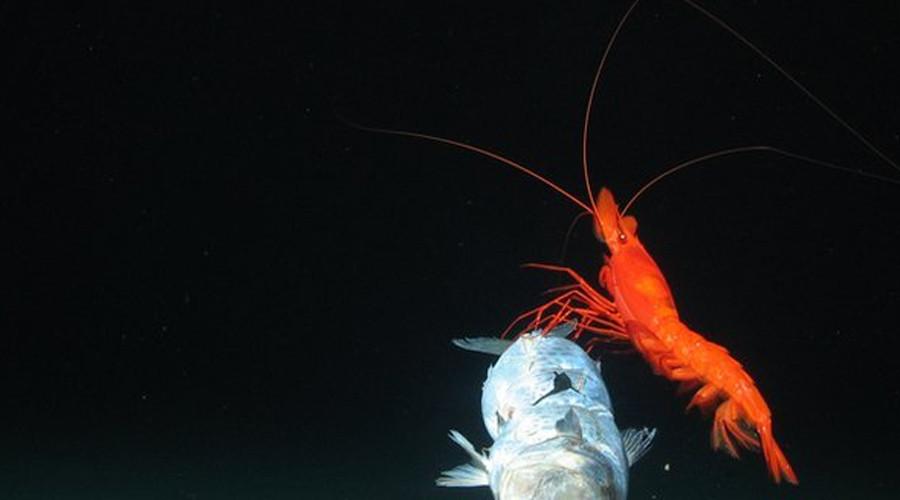 5. Разлом Новых Гебрид, Тихий океан Этот разлом, расположенный у восточного побережья Австралии, до