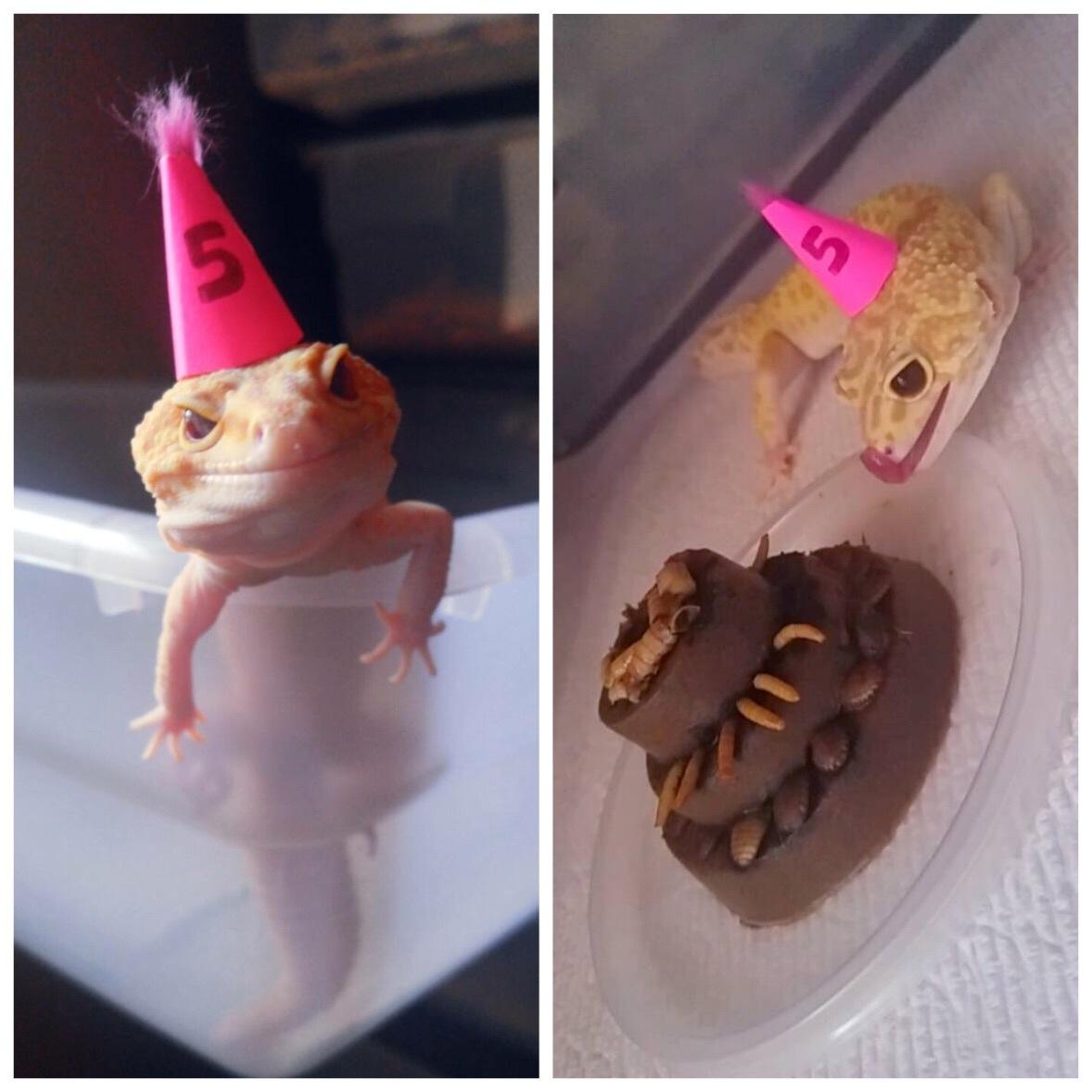 У маленькой ящерицы день рождения.