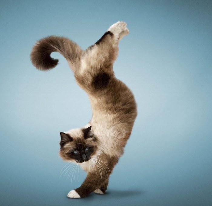 4. Кошка всегда грациозна, даже когда просто сидит на диване.