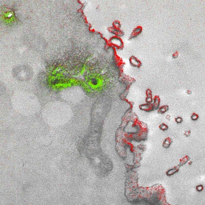 Получены первые цветные изображения при помощи электронного микроскопа