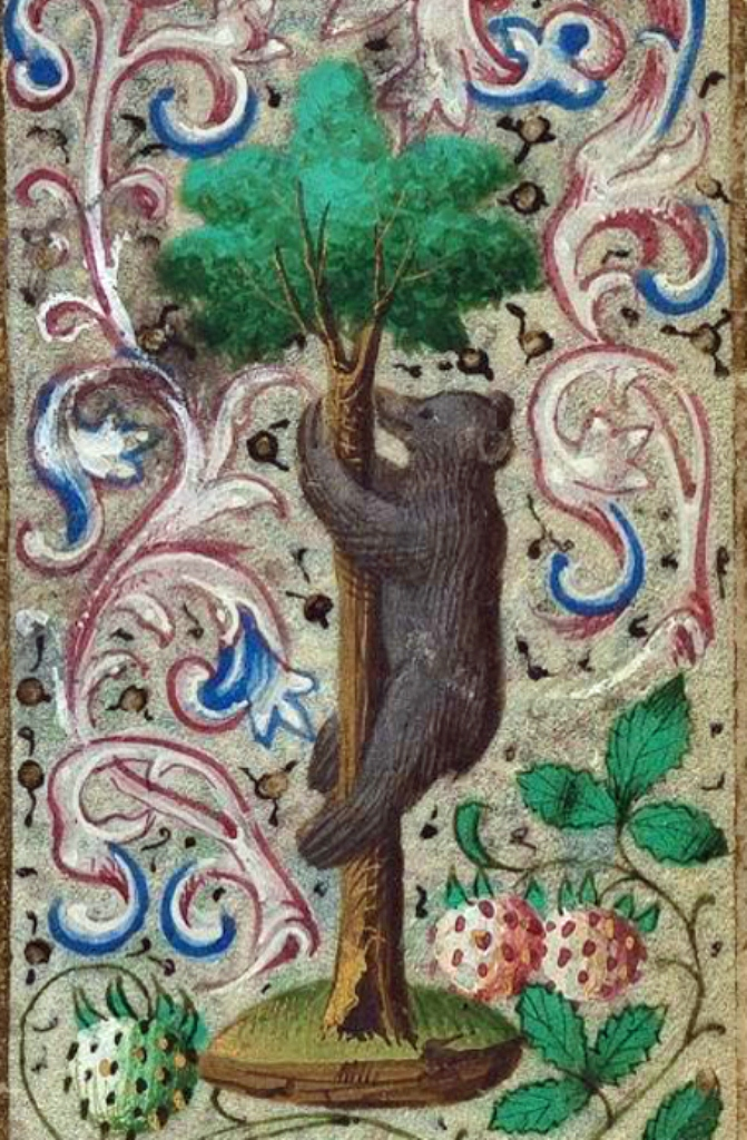 Orso-che-si-arrampica-Book-of-Hours-of-Simon-de-Varie-BK1.jpg