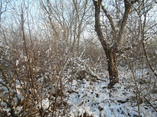 Зимы начало, на Природе снежной! 2016-12-01