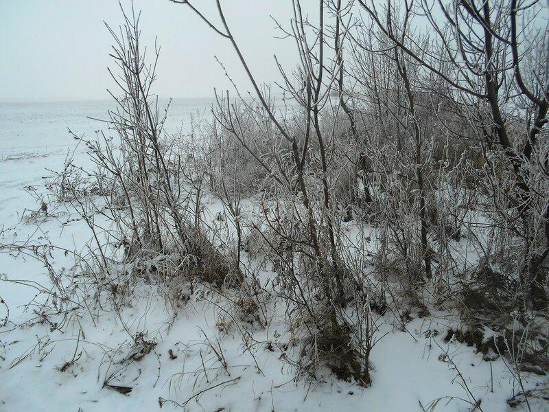 Лесок на берегу морском ... В походе декабрьском, снежно-туманном,