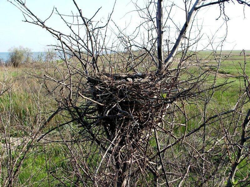 Гнездо ... фотограф Александр Улисский