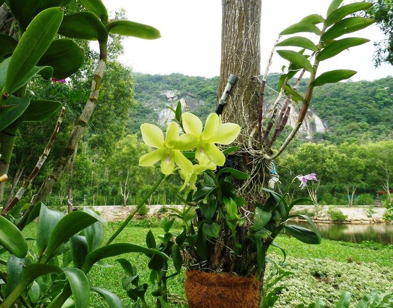На острове Орхидей
