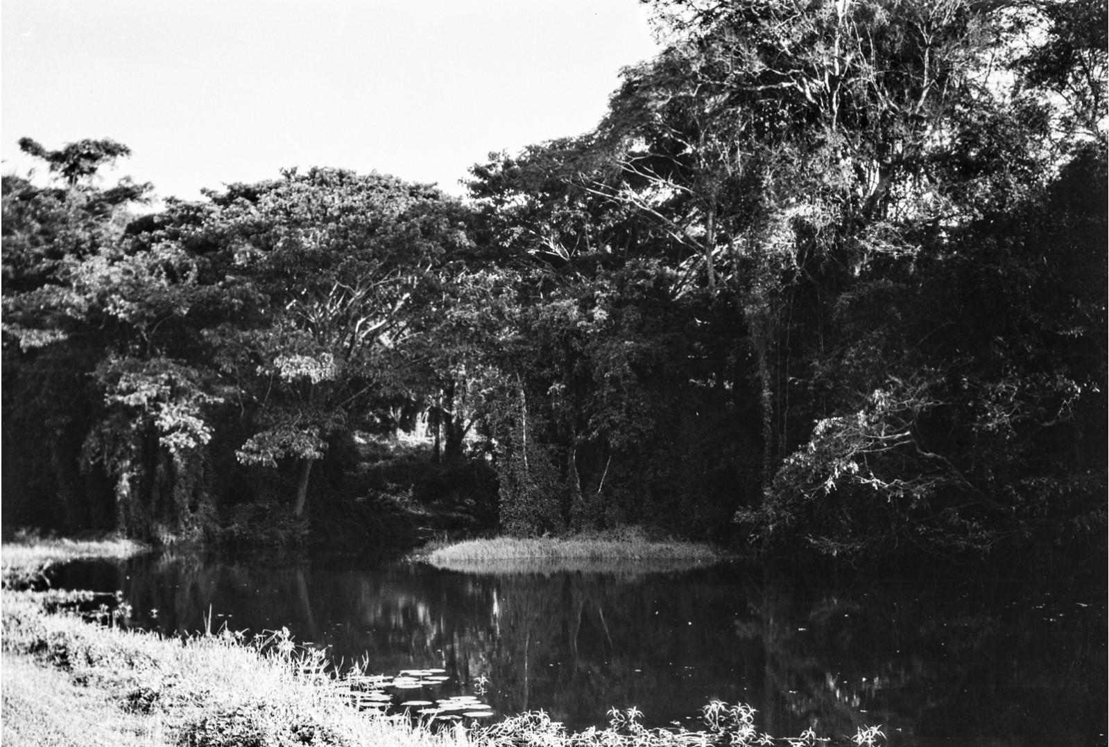 410. Лес рядом с озером