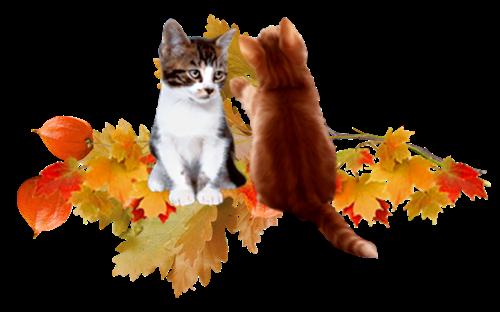 Осеннее (6).png