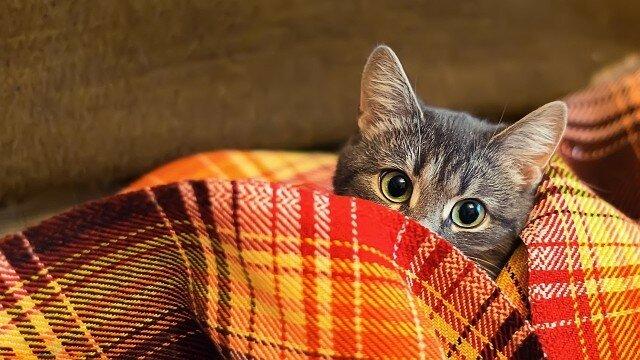 осень-кот-животные.jpg