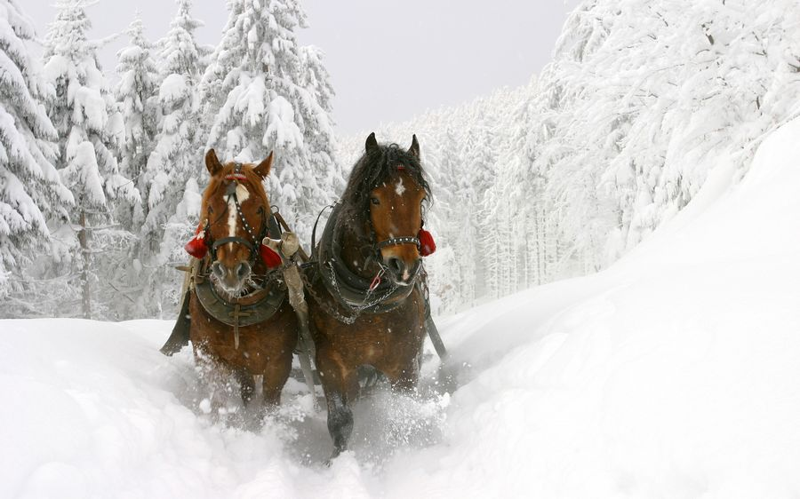 Обои рабочий стол Зимний пейзаж