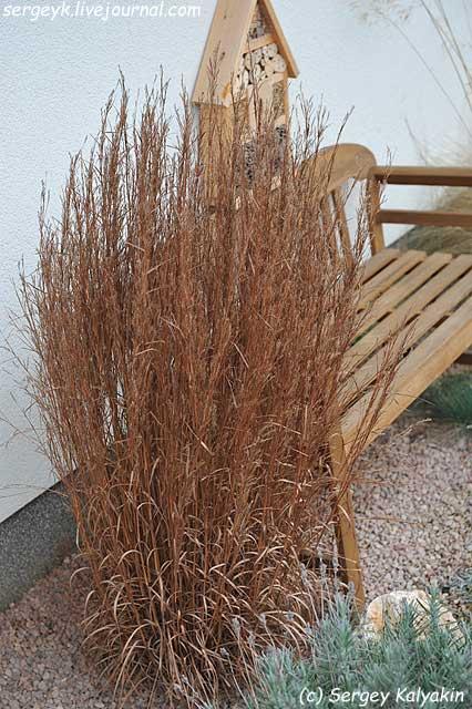 Andropogon gerardii Prairie Summer (3).jpg