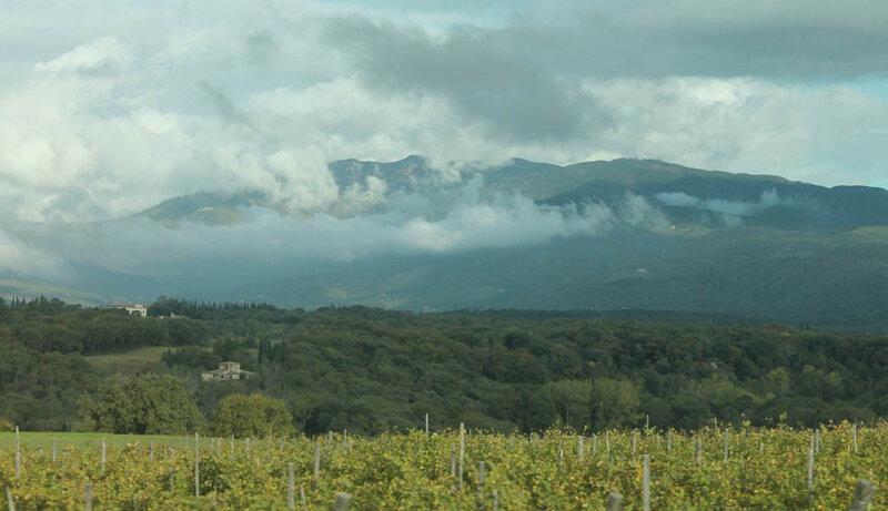 Виноградники в Апеннинах.jpg