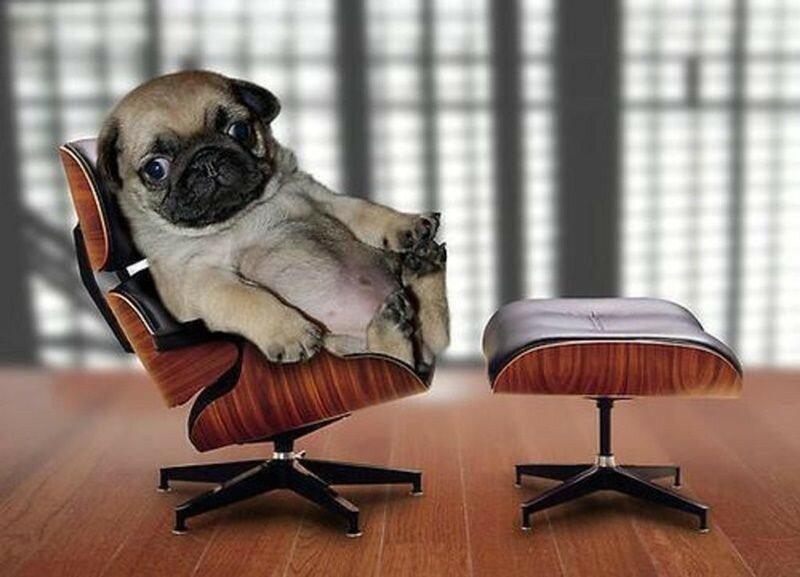 В Великобритании компания наняла колли в качестве офисного работника