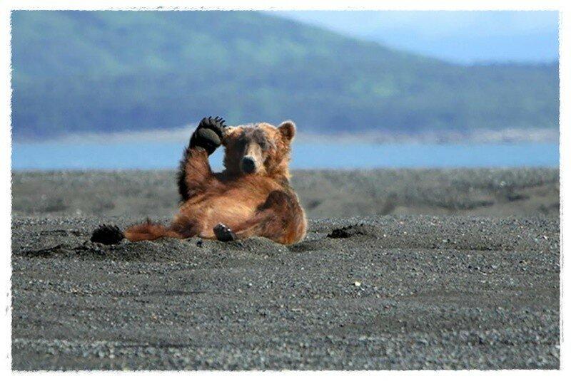 Смешные животные отдыхают, как люди   весёлые фотографии