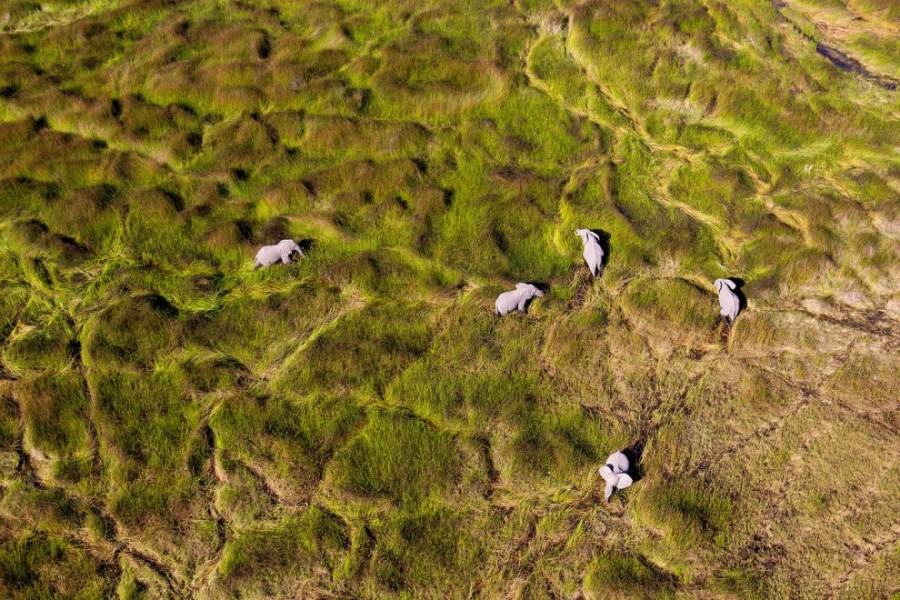5. Африканские слоны в дельте Окаванго, Ботсвана.