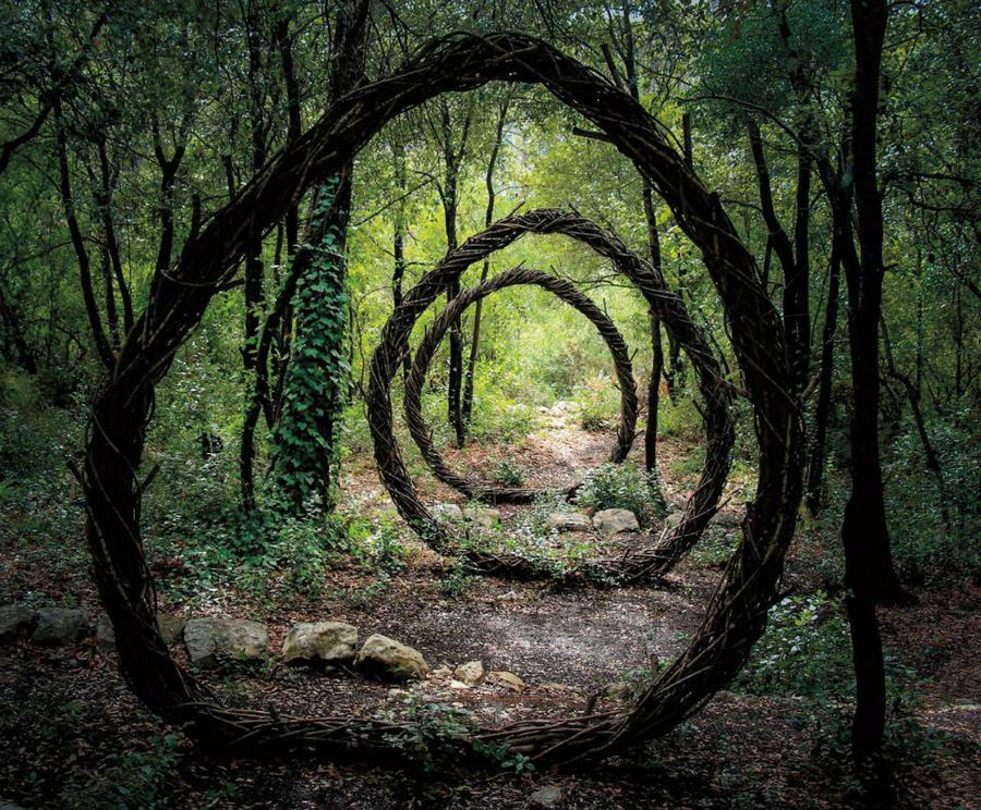 Заколдованный лес (13 фото)