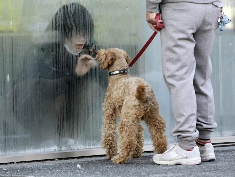 28. Девушка, находящаяся во временной изоляции для очистки от радиации, смотрит на свою собаку через