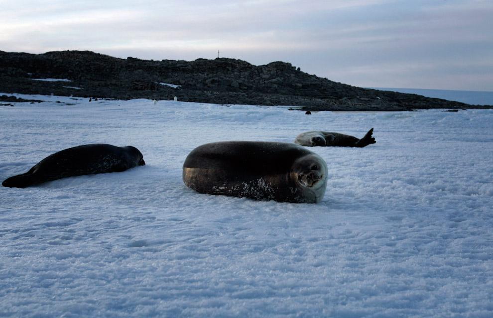 Айсберг B-15A — это крупнейший обломок еще более крупного айсберга B-15, отколовшегося от ледни