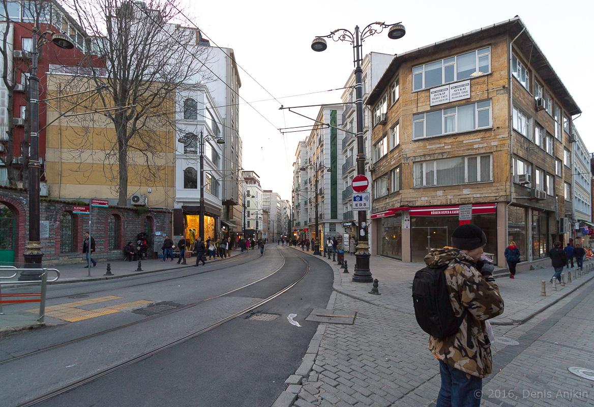 Тюльпаны Стамбул фото 1