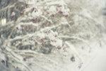 Фото Вячеслав Зитев, Fujifilm X-E1, монокль 24 мм