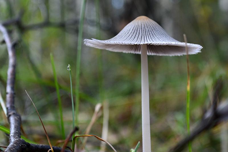 грибной мир 16 5.jpg