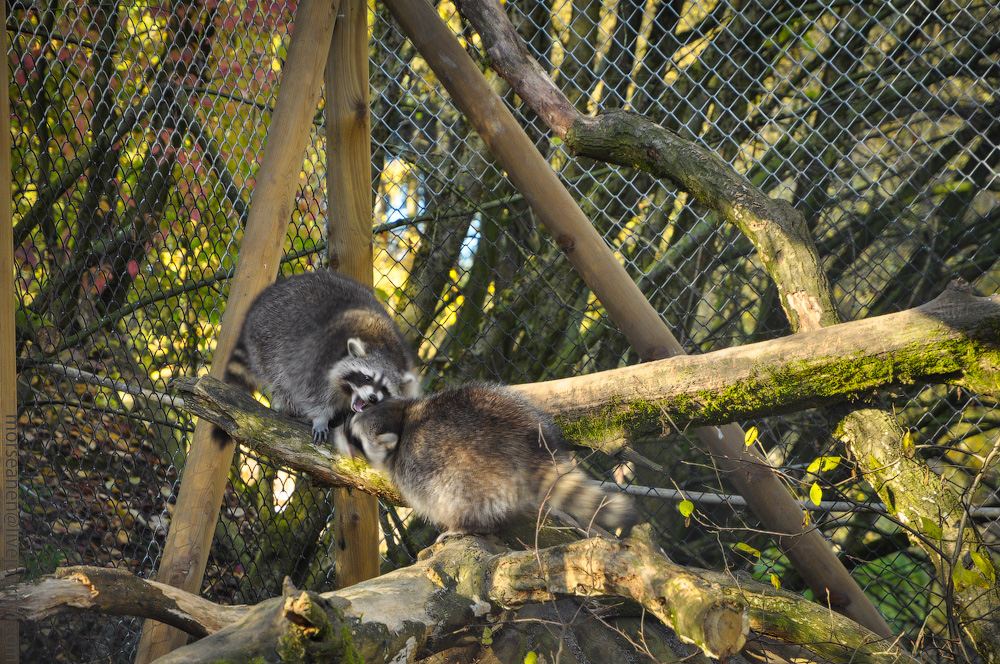 Tierpark-(28).jpg