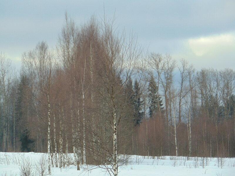 Кусочек леса.