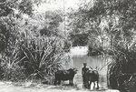 017-Siem-Reap-river.jpg
