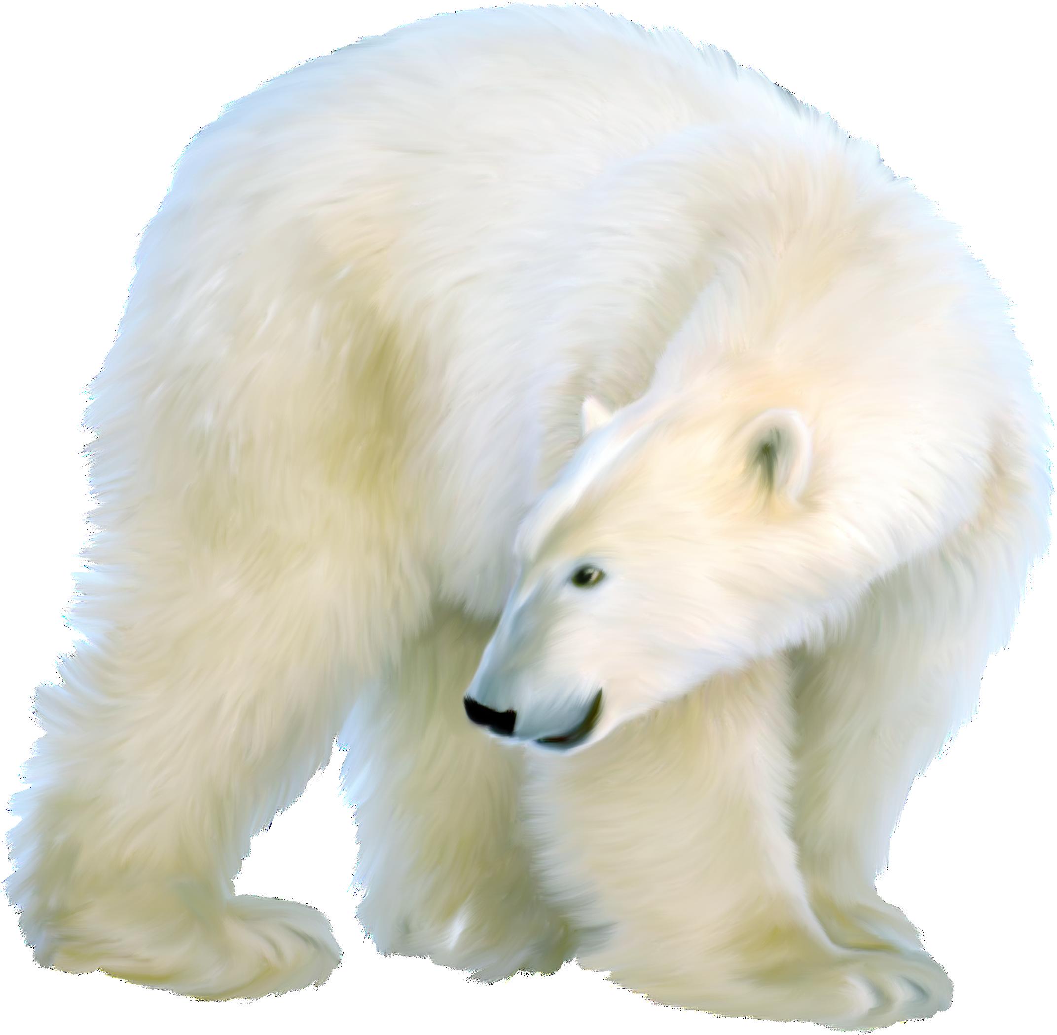 Белый медведь картинки на прозрачном фоне