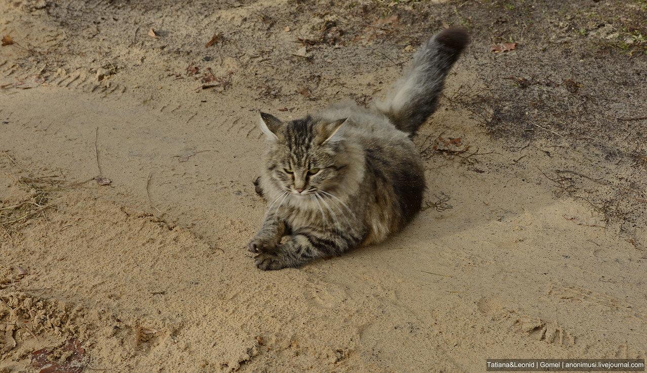 Коты дачные