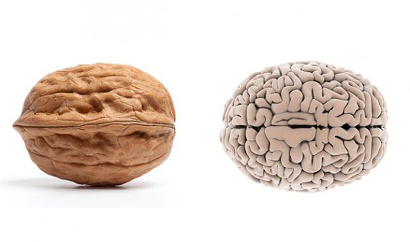 2. Грецкий орех — мозг Складочки и морщинки грецкого ореха делают его форму невероятно похожей на мо