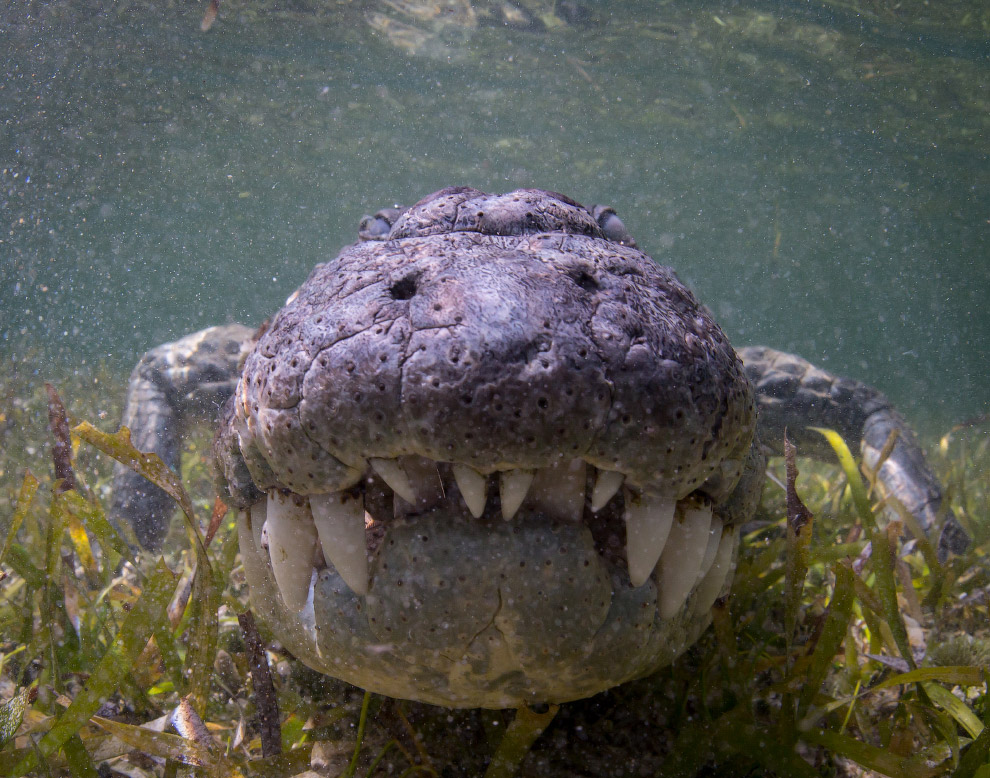 Также сморите « Как бегемот спасал антилопу от крокодила » и « Кассиус Клей — самый большой в м