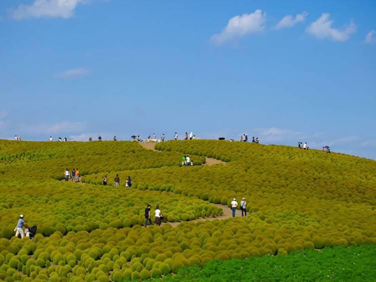12. Национальный парк Хитачи, Япония