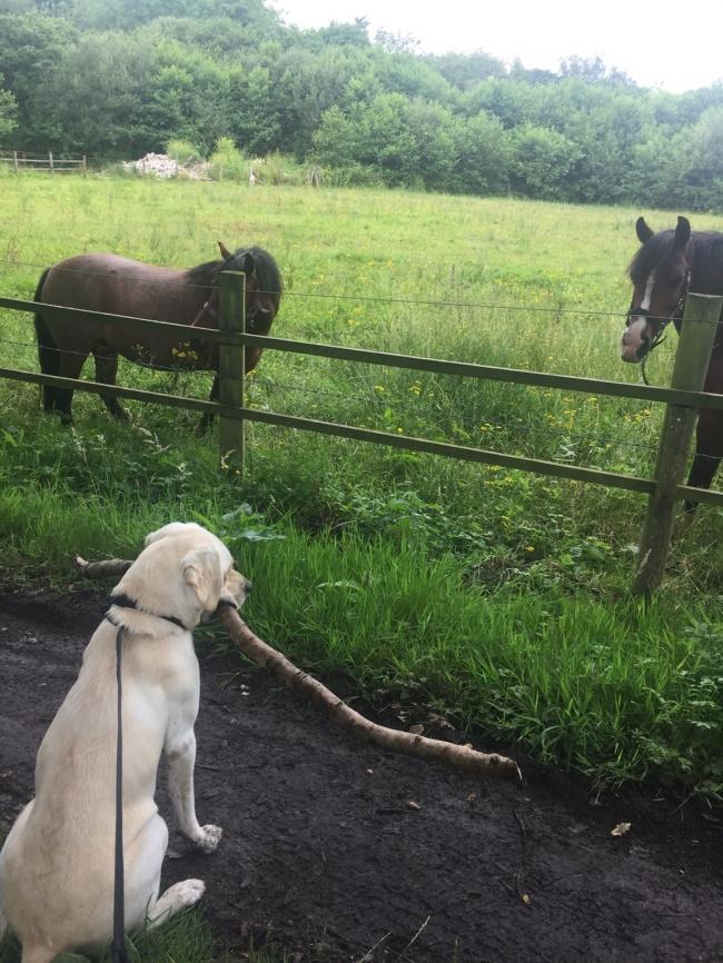© LukasKelly757  Яслышал, что обычно собаки очень радуются, когда хозяин возвращается домой.