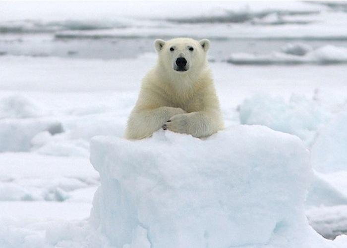 14. Белые медведи всегда приходят на интервью вовремя.