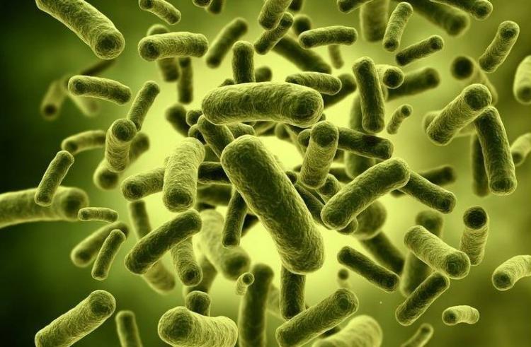 Ученые: кишечные бактерии могут провоцировать суицид